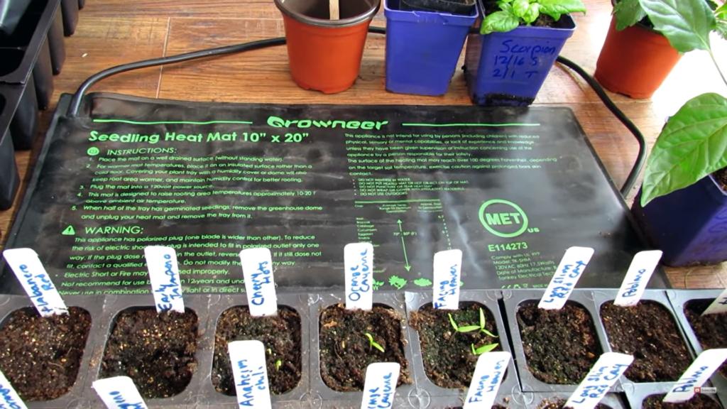 Use a Seedling Heat Mat